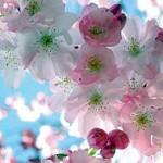 Florais de Bach - Terapia floral